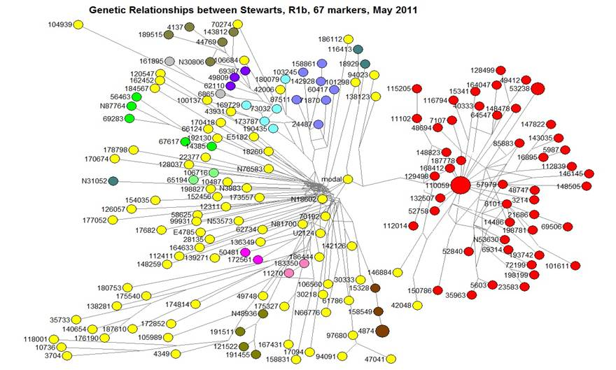 Stewart Haplogroup R1b 67 Marker Relationship Tree – May 2011